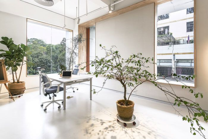办公室绿植装饰摆放