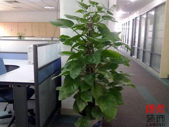 办公装饰绿植摆放