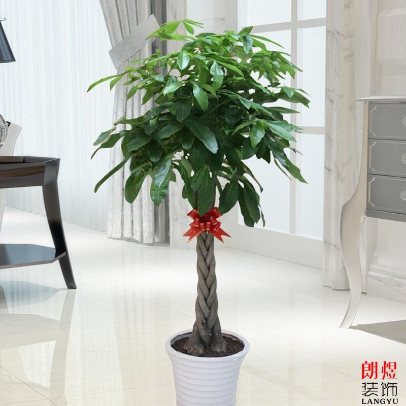 办公室装修绿植放哪些 小植物营造大氛围